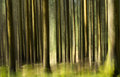 Impressionistic Forest