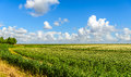 Impressive Cumulus clouds above a Dutch potato field Royalty Free Stock Photo