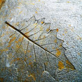 Imprint leaf Royalty Free Stock Image