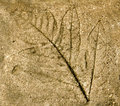 Imprint of leaf on cement floor background Royalty Free Stock Photo