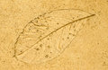 Imprint leaf on cement floor background Royalty Free Stock Photo