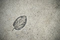 The Imprint leaf on cement floor Royalty Free Stock Photo