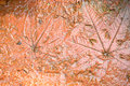 The Imprint leaf on cement floor background,ground texture backg