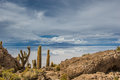 Incahuasi island salar de uyuni bolivia south america Royalty Free Stock Photography