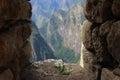Incan Flower