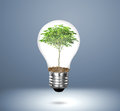 Incandescent light bulb with plant as the filament Stock Photo