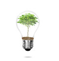 Incandescent light bulb with plant as the filament Stock Image