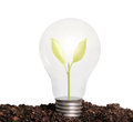 Incandescent light bulb with plant as the filament Royalty Free Stock Photo
