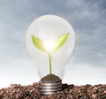 Incandescent light bulb with plant as filament the Royalty Free Stock Photography