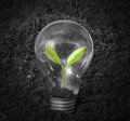 Incandescent light bulb with plant as filament Royalty Free Stock Photo