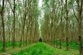Incantando in forest path profondo Fotografie Stock Libere da Diritti