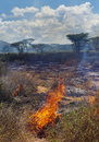Incendio violento in savanna africana Immagini Stock