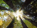 Incidence of light in circle of trees sun shining from above a seven tall Royalty Free Stock Photography