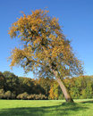 Incline tree autumn scenery in southern germany including a Royalty Free Stock Photo