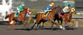 Include The Cat Wins an Allowance Race Stock Images