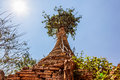 Indein inle lake ancient stupas at overgrown with plants myanmar Stock Images