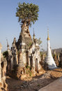 Indein old pagoda with a tree near inle lake myanmar southeast asia Stock Photography