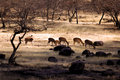 India, Ranthambore: Deers Royalty Free Stock Image