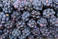 Indian black grapes bunch of at a market Stock Images