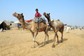 Indian boy with camels at Pushkar camel fair Royalty Free Stock Images