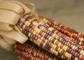 Indian corn Royalty Free Stock Photo