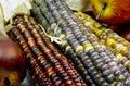 Indian corn closeup Royalty Free Stock Photo