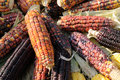 Indian corn on cobs Royalty Free Stock Images