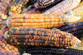 Indian corn on cobs Stock Photo