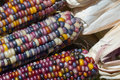Indian corn colorful close up Stock Image