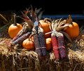 Indian corn and pumpkins Stock Photo