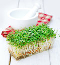 Indian Cress Royalty Free Stock Photography