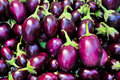 Indian Eggplant Royalty Free Stock Photography