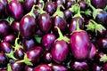 Indian Eggplant Royalty Free Stock Photo
