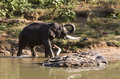 Indian Elephant getting a bath in India Stock Photos