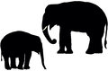 Indian elephants adult and calf elephant silhouette Stock Photos