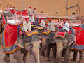 Indian elephants and their mahouts amber india march waiting to convey visitors to the the sixteenth century fortress at the Royalty Free Stock Image