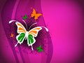 Indian Flag butterfly on shiny pink. Stock Photo