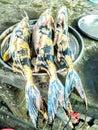 Indian food  name Tiger fish. Royalty Free Stock Photo