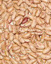 Indian Kidney Beans Stock Photography