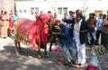 Indian master show in gangireddu aata the bovine and human coordination during sankranti festival season hyderabad india on Stock Photography