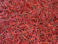 Indian Red chilies Royalty Free Stock Image