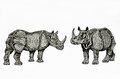 Indian rhinos couple Stock Images