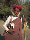 Indian sheperd carrying a lamb ghanerao india march an unidentified old shepherd wearing red turban is during the summer Stock Image