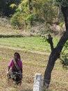 Indian women working in field .