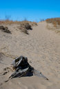 Indiana dunes national lakeshore a buried piece of driftwood along the dune succession trail Stock Photos
