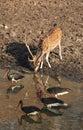 Indien-Bewässerungs-Loch 2 Lizenzfreies Stockfoto