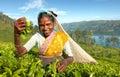 Indigenous Sri Lankan Tea Picker Concept Royalty Free Stock Photo