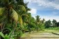 Indonesia, Bali, Rice terraces Royalty Free Stock Photo