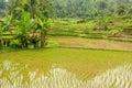 Indonesia countryside on the west sumatra island near bukittinggi city resort Stock Photo