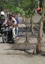 Indonesia road condition banana trees are planted in the middle of a by locals to protest about damaged in boyolali java Stock Photography